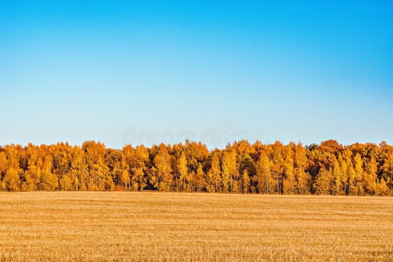 Forêt par le pré photographie stock libre de droits