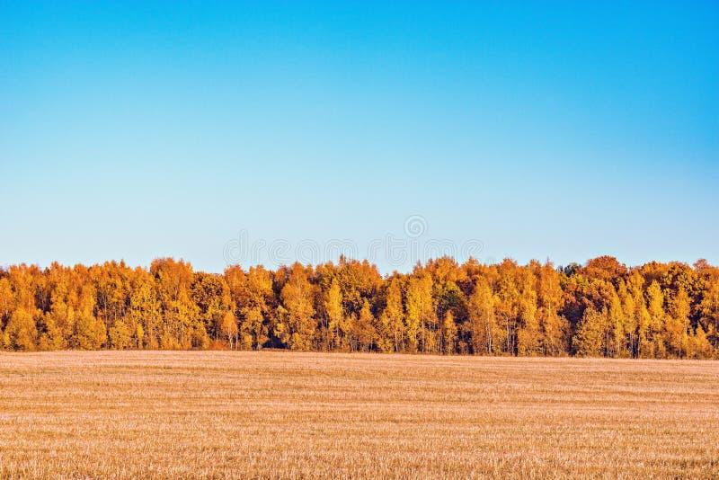 Forêt par le pré photographie stock