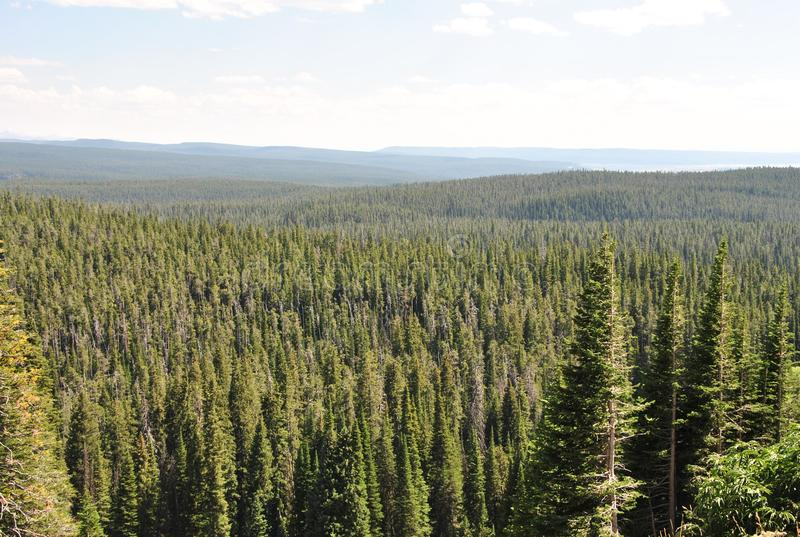 Forêt, parc national de Yellowstone, Wyoming photo stock