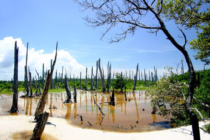 Forêt Petrified image libre de droits