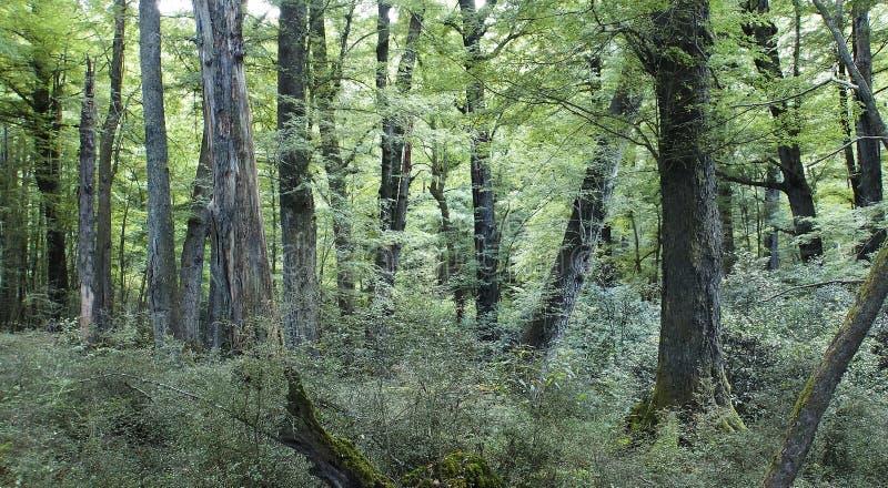 Forêt pluviale, Nouvelle-Zélande images stock