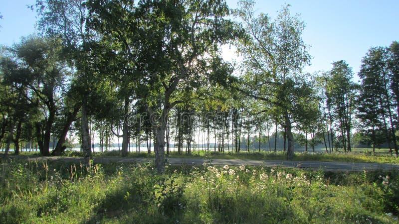 Forêt près de lac Valdai Nature de la Russie du nord image stock