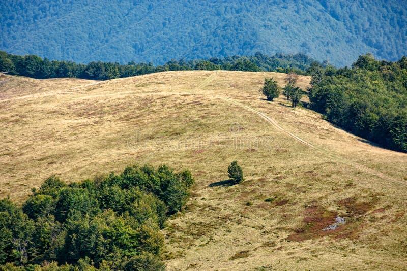 Download Forêt Près De Pré Sur Le Flanc De Coteau De Montagne Image stock - Image du pente, distance: 77154265