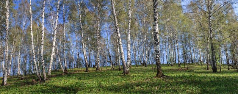Forêt printanière photo stock
