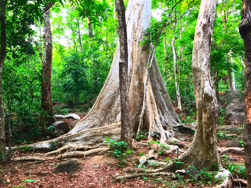 Forêt profonde photographie stock