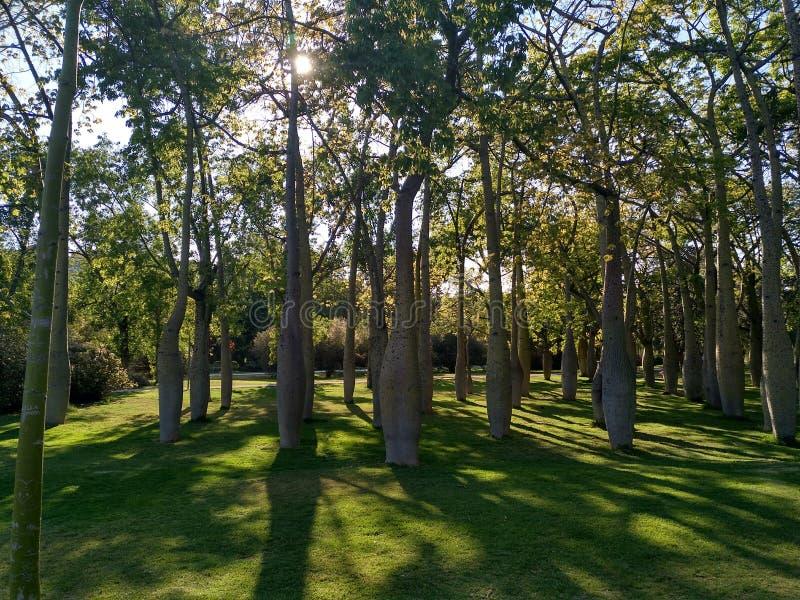 Forêt profonde en Espagne 1 photographie stock libre de droits
