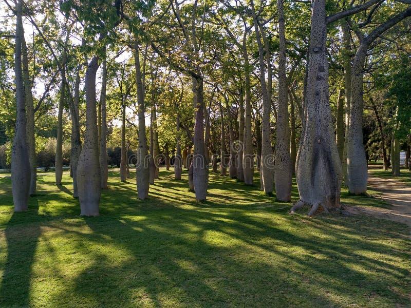 Forêt profonde en Espagne 2 photographie stock