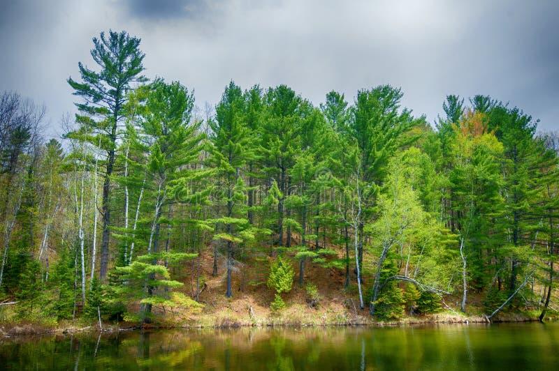 Forêt réfléchissant sur le lac calme dans Ontario du nord, Canada images stock