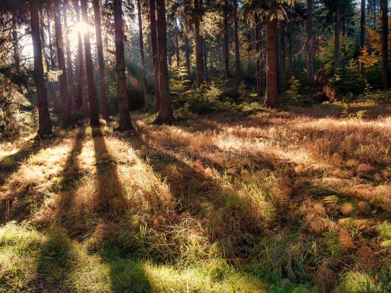 Forêt rétro-éclairée dans des couleurs d'automne photographie stock libre de droits