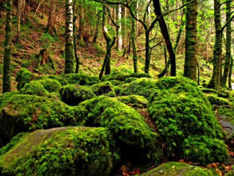 Forêt rêveuse photos libres de droits