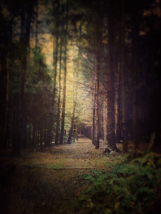 Forêt rêveuse image stock