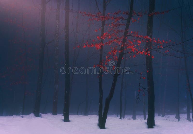 Forêt rêveuse d'imagination en hiver photos libres de droits