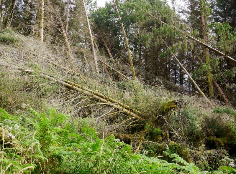 Forêt ravagée par tornade photographie stock