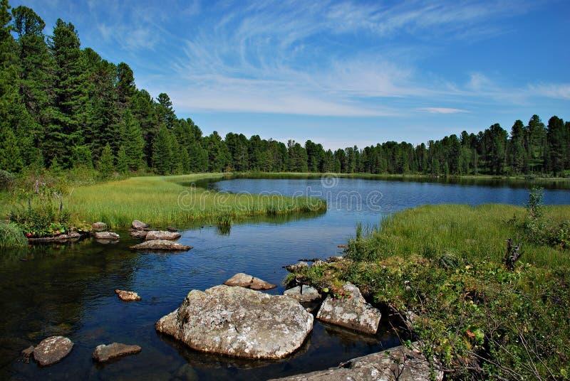 Forêt, rivière et lac sauvages Karacol, Altai, Russie images stock