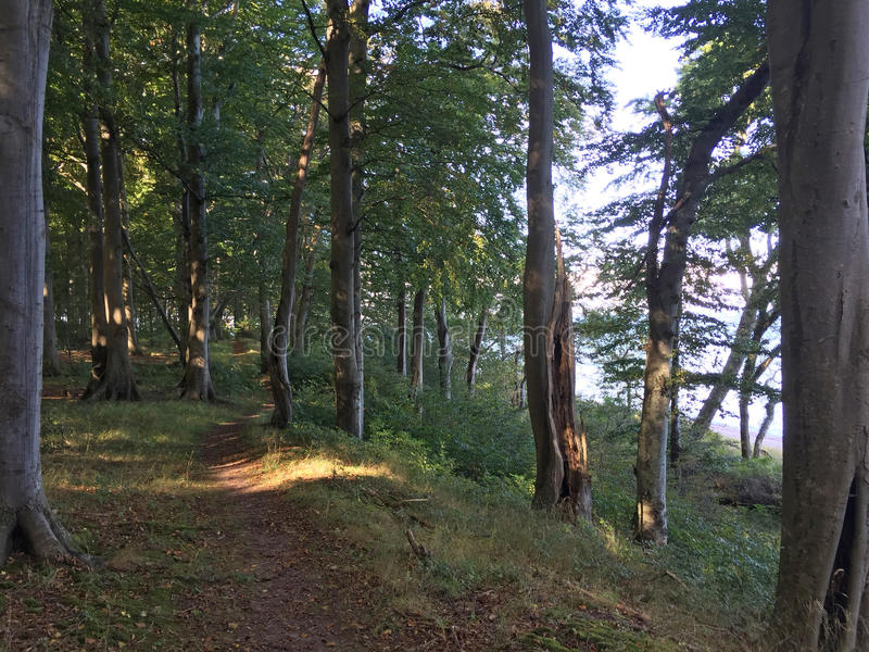 Forêt romantique par la mer photo libre de droits