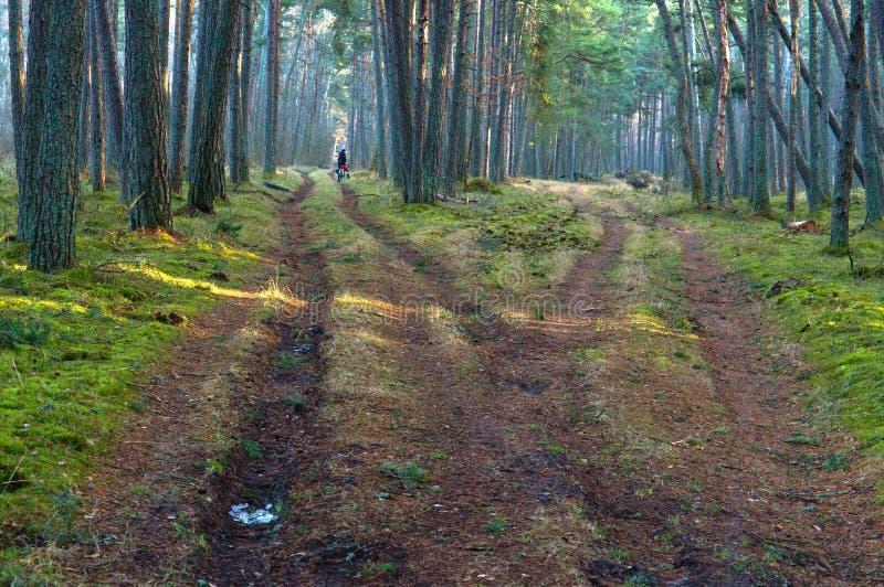 Forêt, route, voie, vert, conifére, voyage, vélo, aventure, carrefours images libres de droits