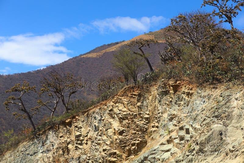 Forêt sèche tropicale en Equateur du sud photo stock