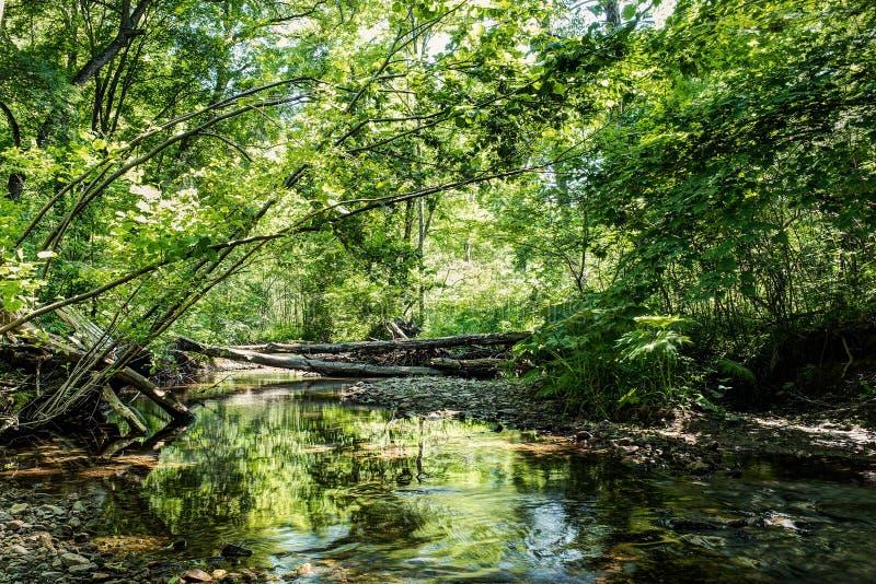 Forêt sauvage avec la crique - dynamique élevée image libre de droits