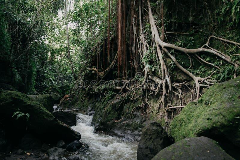 Forêt sauvage verte de jungle et rivière débordante photographie stock