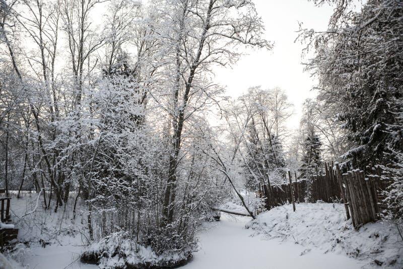 Forêt scandinave d'hiver sur les banques de la rivière dans la neige au jour givré de coucher du soleil photos libres de droits