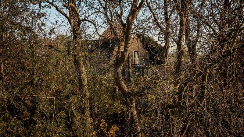Forêt sombre en banlieue photos libres de droits
