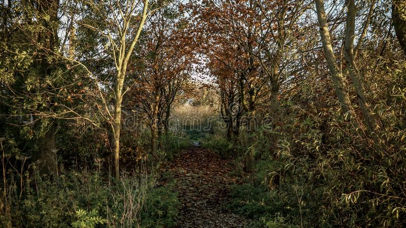 Forêt sombre en banlieue photographie stock