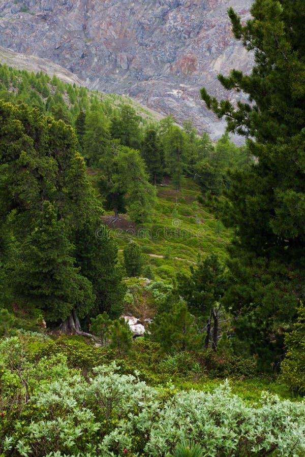 Download Forêt Suisse De Pin En Pierre Et De Sapin De Norvège Image stock - Image du switzerland, glacier: 45369447