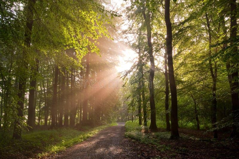 Forêt Sunlit photographie stock