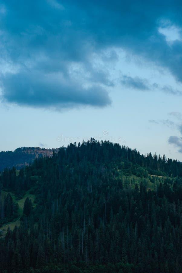 Forêt sur le dessus de la montagne contre le ciel égalisant photos libres de droits
