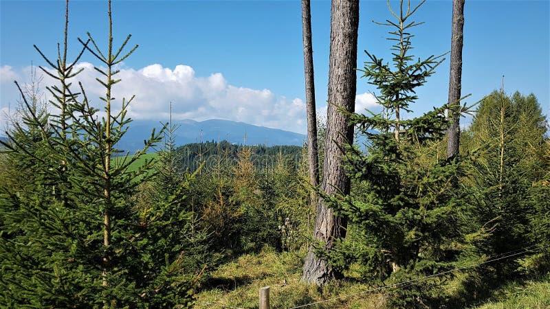 Forêt sur les collines autrichiennes photographie stock