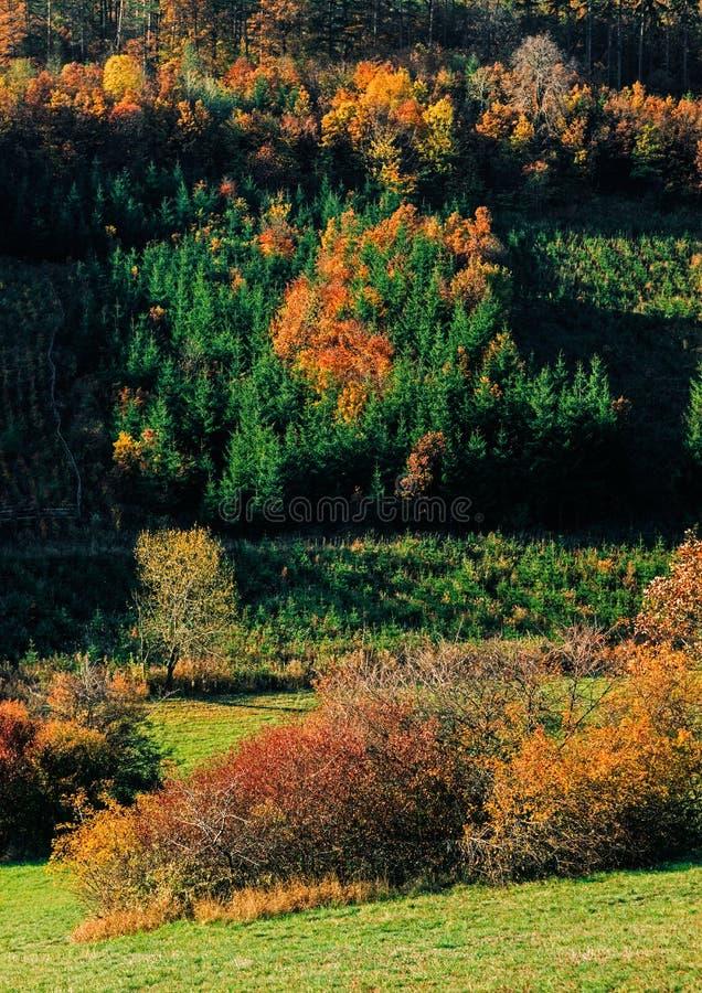 Forêt tardive d'automne photographie stock