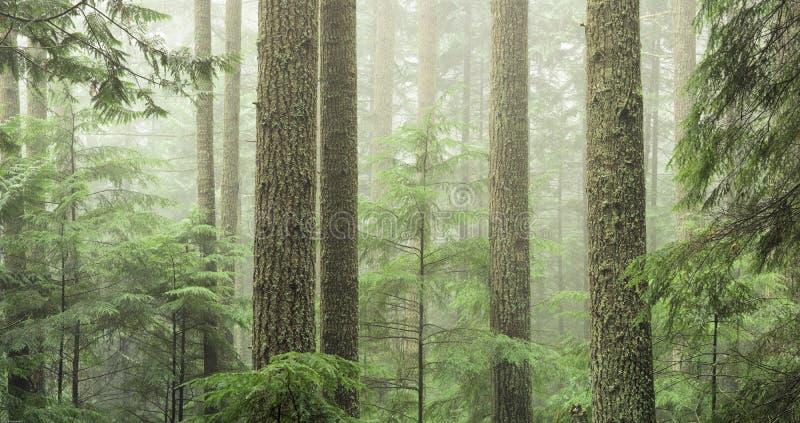 forêt toujours d'actualité mûre images libres de droits
