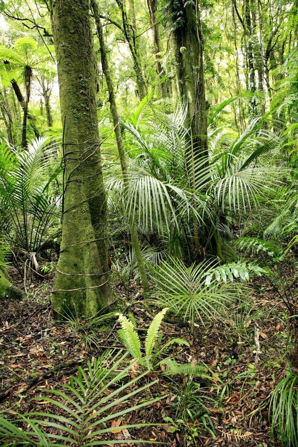Download Forêt tropicale photo stock. Image du feuillage, forêt - 4350198