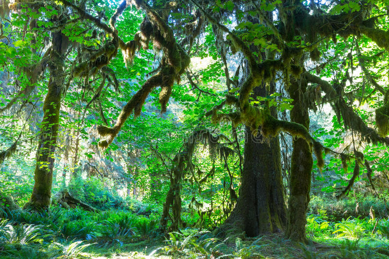Download Forêt tropicale photo stock. Image du woodland, route - 76076520