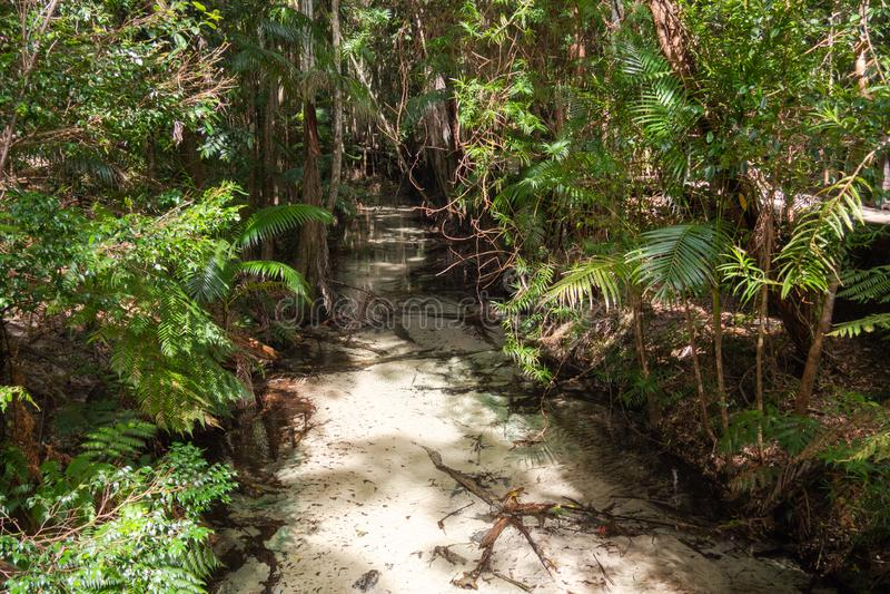 Forêt tropicale centrale Fraser Island de station image stock