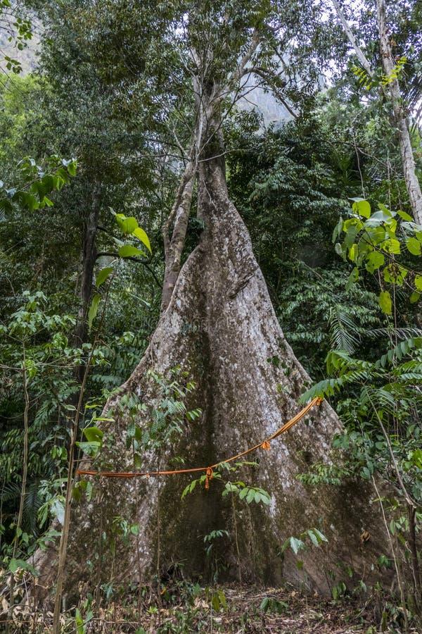 Forêt tropicale chez Tiger Cave Temple, Thaïlande images libres de droits