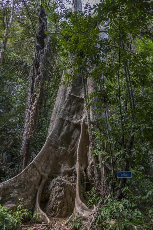 Forêt tropicale chez Tiger Cave Temple, Thaïlande photographie stock