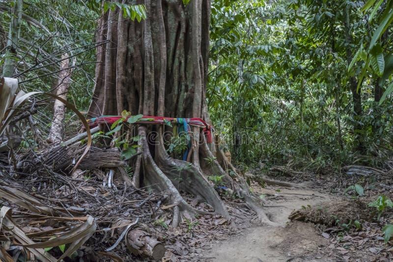 Forêt tropicale chez Tiger Cave Temple, Thaïlande photos stock