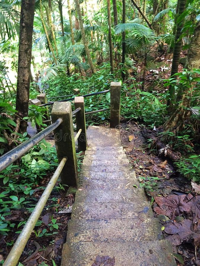 Forêt tropicale d'EL Yunque photos stock