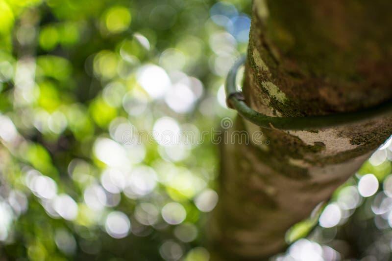 Forêt tropicale tropicale dans l'Australie photo libre de droits