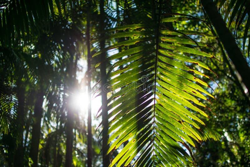 Forêt tropicale tropicale dans l'Australie photos stock