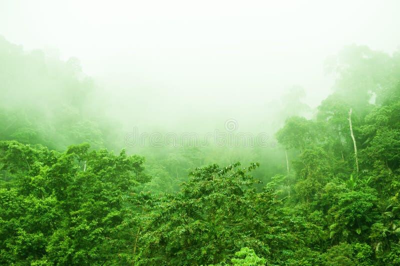 Forêt tropicale dans le matin brumeux images stock