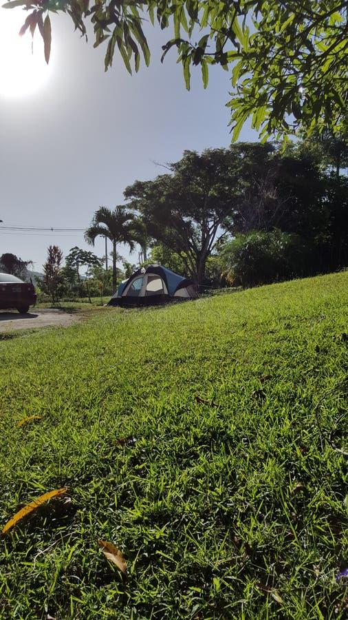 Forêt tropicale dans San Sebastian, Puerto Rico images libres de droits