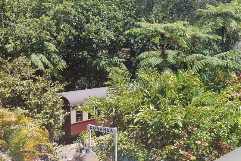Forêt tropicale de Daintree images stock