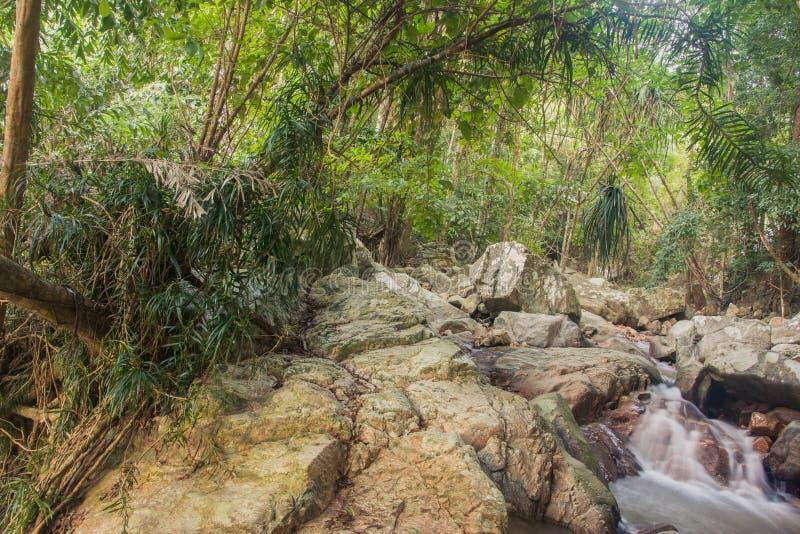 Forêt tropicale tropicale de Forest Jungle avec la photographie de crique Fond scénique de nature, Asie photo libre de droits