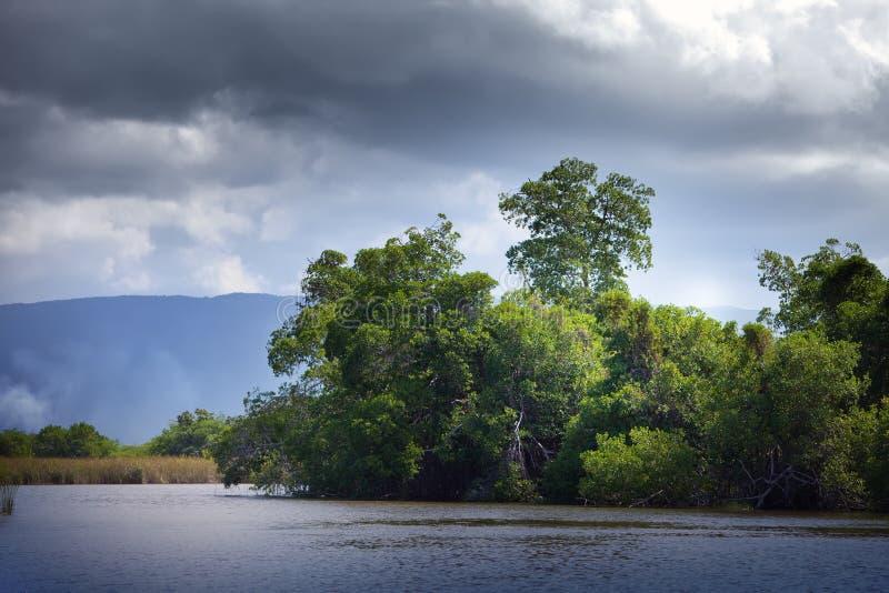Forêt tropicale de palétuvier de bosquets sur le fleuve noir jamaica images stock