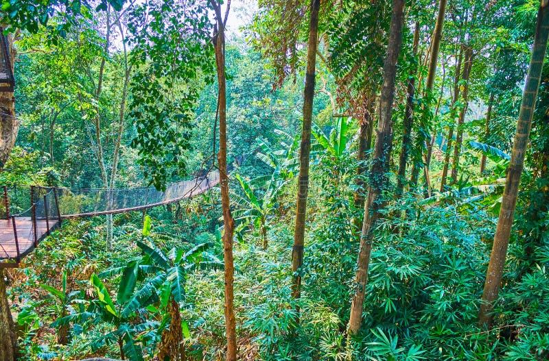 Forêt tropicale tropicale du pont suspendu, promenade supérieure d'arbre, jardin de Mae Fah Luang, Doi Tung, Thaïlande photos libres de droits
