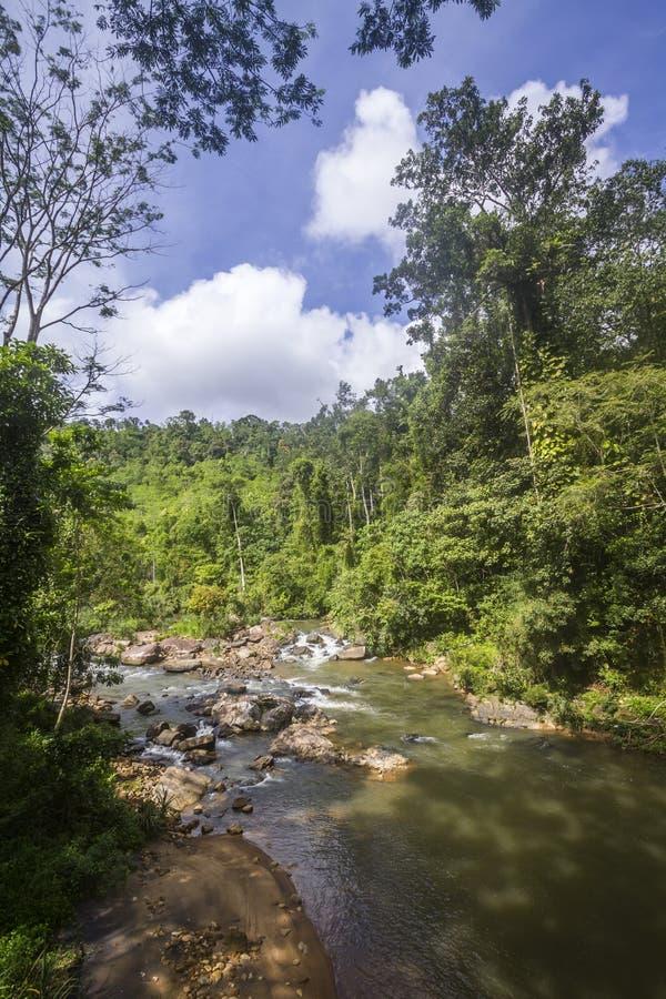 Forêt tropicale en Sinharaja Forest Reserve, Sri Lanka images stock