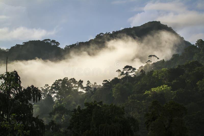 Forêt tropicale en Sinharaja Forest Reserve, Sri Lanka photo libre de droits