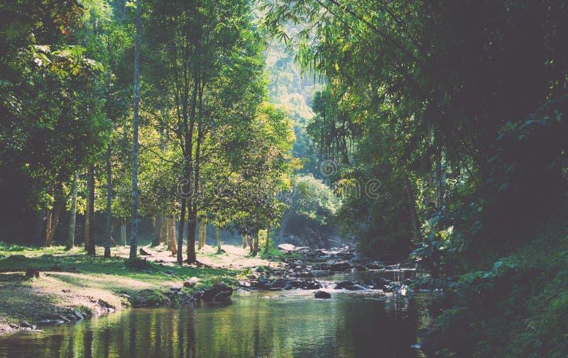 Forêt tropicale tropicale en Thaïlande images stock